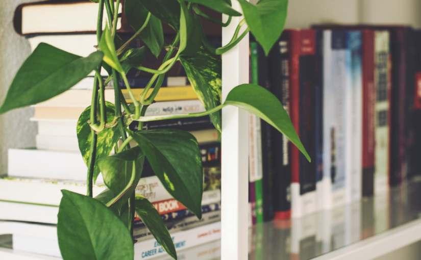 Understanding Air Plants