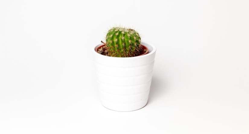 Why Tiny DeskPlants?
